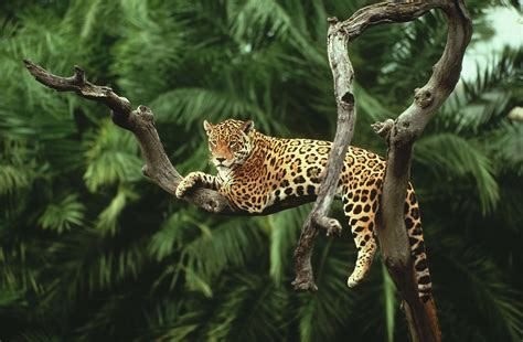 Jaguar Backgrounds by Jaguar Hd Wallpapers