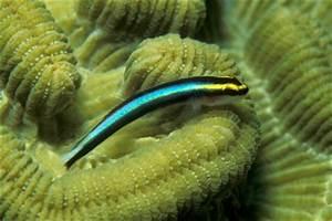 Fische Für Anfänger : meerwasserfische fische f r dein meerwasseraquarium ~ Orissabook.com Haus und Dekorationen