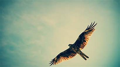 Hawk 4k Wallpapers Birds Eagle Flying Wings