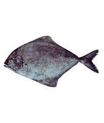 fish  maharashtra manufacturers  suppliers india