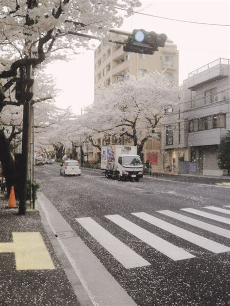 aesthetic city grunge japan nature pale photography