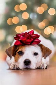 dog christmas card idea - Dog Christmas Card Ideas