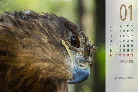 grenzabstand bäume nrw die 77 besten wundersch 246 ne hintergrundbilder mit tiere