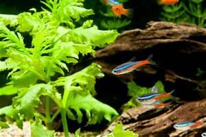 Pflanzen Für Aquarium : aquarium pflanzen werden braun so schaffen sie abhilfe ~ Buech-reservation.com Haus und Dekorationen