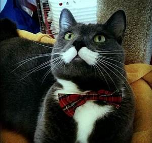 30 Hysterically Hip Cats With Mustaches - Meme Collection