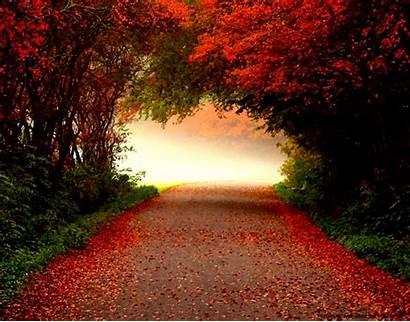Desktop Autumn Wallpapers Downloads Fall Screensavers Backgrounds