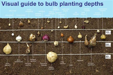 how to grow bulbs corner