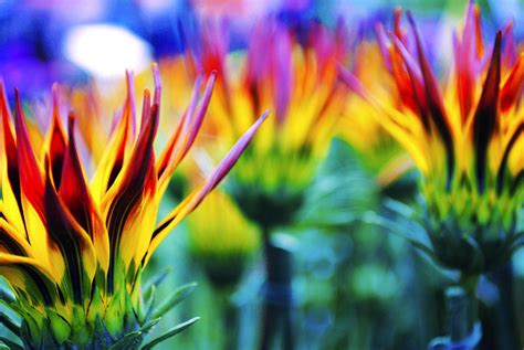 big colorful flowers colorful flowers together photograph by sumit mehndiratta