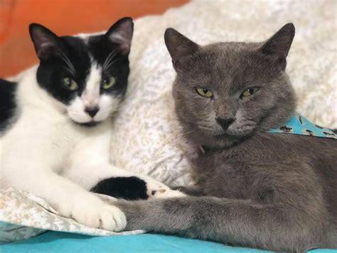 Hoy se celebra el Día Internacional del Gato y aquí te ...