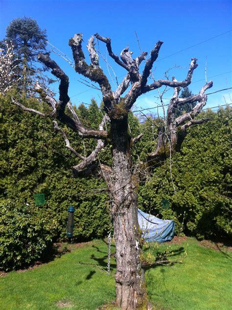 support wildlife insects backyard habitats