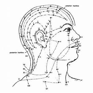Free Acupuncture Point Diagram