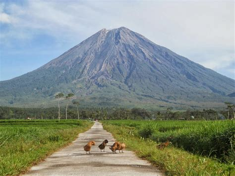 gunung api semeru  malang