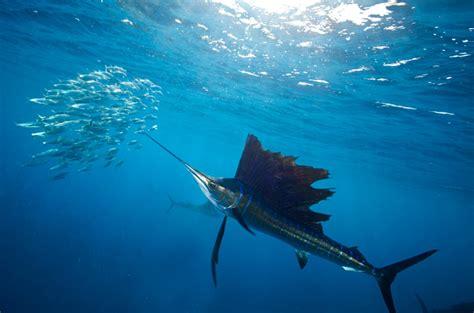 oceans  losing oxygenand   hostile  life