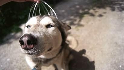 Husky Gifs Dog Head Massager Perros Siberian