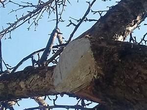 Bäume Verschneiden Obstbäume : monsterhaus obstb ume schneiden ~ Lizthompson.info Haus und Dekorationen