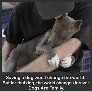 People showing compassion towards animals - Growth Origin