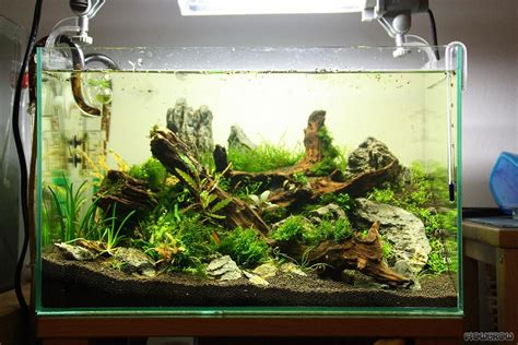 Aquascape Shrimp Tank by Planted Tank Aquascape Aquascaping Planted Tanks