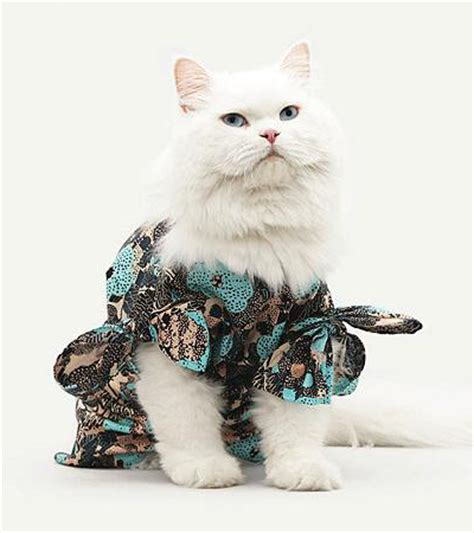 cat fashion show