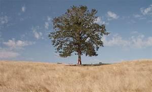 Baum Pflanzen Anleitung : warum es gut tut einen baum zu pflanzen anleitung baum pflanzen ~ Frokenaadalensverden.com Haus und Dekorationen