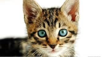 cat faces cat closeup with green wallpaper