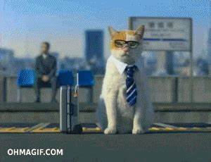 Cat Working GIF - Find & Share on GIPHY