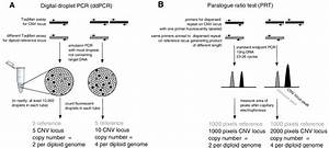 Two robust PCR-based methods to measure CNv. a Digital ...