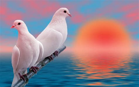 3d Birds Wallpapers by 3d Birds 37 Background Hdlovewall