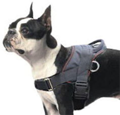Welpen Geschirr Französische Bulldogge