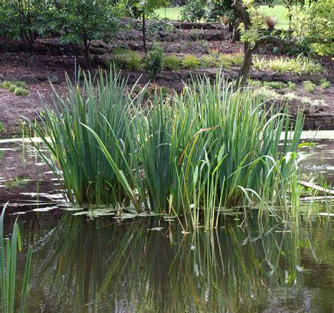 water plants file watergardenplants jpg wikimedia commons