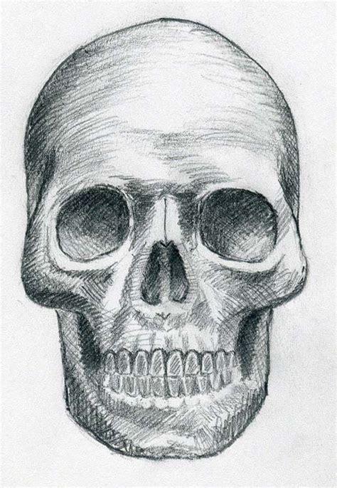 skull drawing  drawing