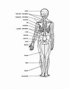 Diagram  Fully Labeled Human Skeleton Diagram