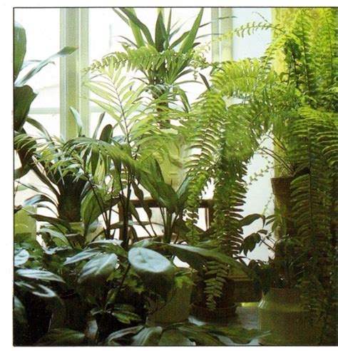 Best Indoor Window Sill Plants by Growing Plants At A Facing Window