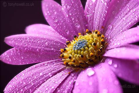 flower photo tips   images  master