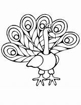 Peacock Coloring Cartoon Pages Easy Imagery Colouring Drawing Baby Getdrawings Simple sketch template