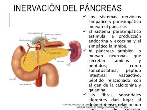 q es el cancer de pancreas c 225 ncer de p 225 ncreas
