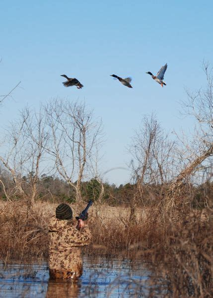 Duck Hunting Boat Necessities by Public Affairs South Carolina Sportsman Content Sc