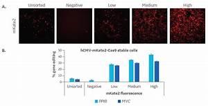 Lentiviral Cas9 Nuclease Reagents