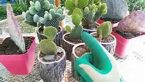 Pot A Cactus : how to grow a cactus in a pot youtube ~ Farleysfitness.com Idées de Décoration