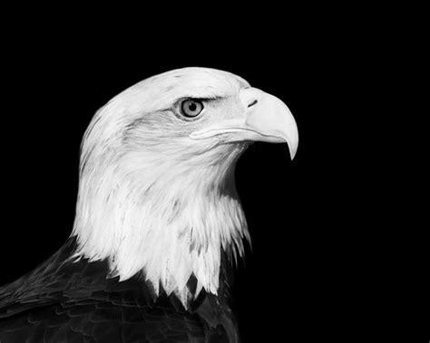 beautifully black  white animal photography