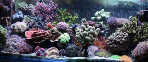 Aquascaping Tips by 5 Reef Aquascaping Tips For Any Saltwater Tank