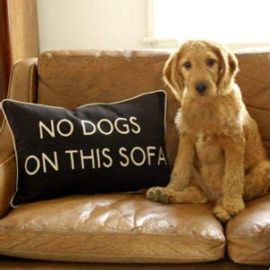 4 pet friendly upholstery fabrics