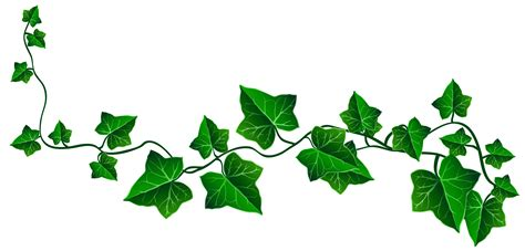 Ivy Transparent PNG Pictures Free Icons And PNG Backgrounds