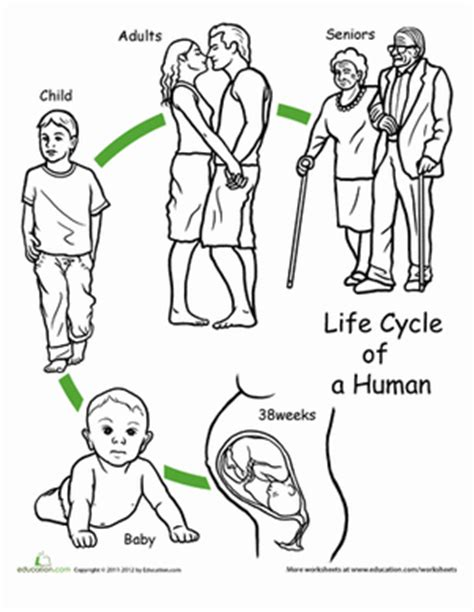 color the cycle human worksheet education