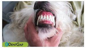 how much should a dog s dental cleaning cost