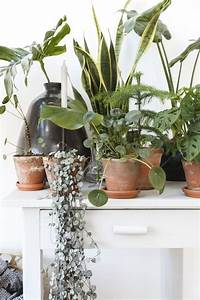 Jardiniere Beton Cellulaire : exceptionnel ext rieur mod le comprenant fabriquer jardiniere beton cellulaire ~ Melissatoandfro.com Idées de Décoration