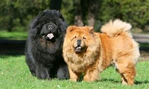 Image Gallery most beautiful dog breeds