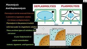 Plasmolysis And Deplasmolysis  Biology Lecture