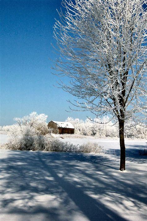 Free Winter Wonderland 3 Stock Photo Freeimagescom
