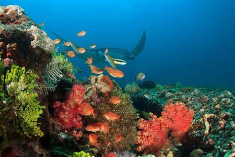 divine diving labuan bajo