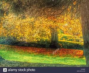 Rasen Düngen Herbst : herbst laub auf gr nen rasen stockfoto bild 310521422 ~ Watch28wear.com Haus und Dekorationen